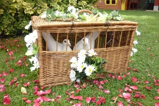 Vypouštění svatebních holubů